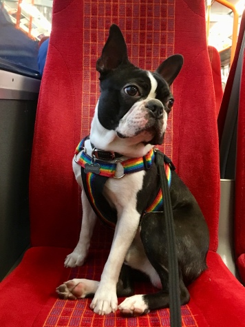 Just chilling on the train!