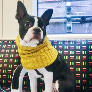 Diego in his snood on the overground looking cool!